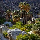 Desert Oasis by Rimrunner