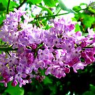 Lilac by ©The Creative Minds