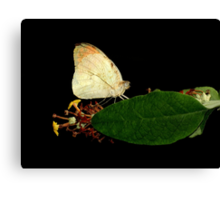 Botanical With A Hint Of Flying Element ~ Part Two Canvas Print