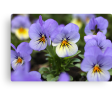 Lavender Faces With Yellow Highlights Canvas Print