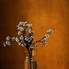 Still Life #2 by Prasad