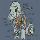 Japanese Anatomy Of A Pokemon Squirtle by cupcakewaffles