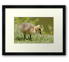 This is Not Ryan Framed Print