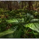 Skunk Cabbage Front and Center by Aaron Campbell