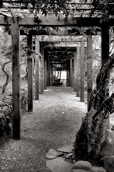 Vine Covered Path by Bob Wall