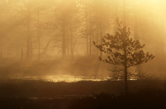 16.5.2013: Spring Morning III by Petri Volanen