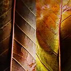 Leaf by Cobi Sarah