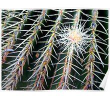 Cactus (3) Poster
