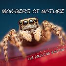 The Amazing Jumping Spiders Calendar by Mario Cehulic