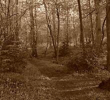 Forest - Hidden Path by Ben Smith