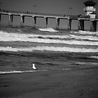The Lone Gull by JDToomer