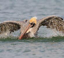 Pelican Bath by William C. Gladish