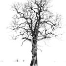 The Lonley Tree by David Williams
