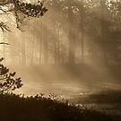 16.5.2013: Sunrise in Swamp Forest by Petri Volanen