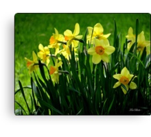 Oh, this is Springtime.. Canvas Print