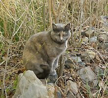 Cat by JackzPlace
