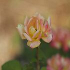 Pastel Rose by Dan  Wampler