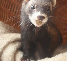 Happy Ferret by SamAdeleArt