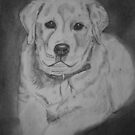 Labrador Puppy Drawing by SamAdeleArt