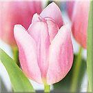 ~ Tulips ~ by Brenda Boisvert