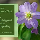 Fragrance of Christ ~ 2 Corinthians 2:15 by Robin Clifton