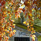 Copper Beech In Sunlight by Fara