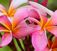 Pinwheel Drops by SynappedPhoto