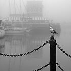 Seagull by awefaul