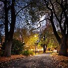 Early Morning inSt David's Park, Hobart, Tasmania by Chris Cobern