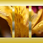 Daylily Collage by aprilann