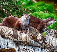 European Otters by Chris Thaxter
