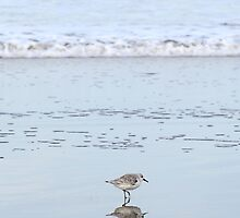 Sanderling by BrightFogPhoto