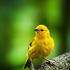 Kona Finch... by tracielouise