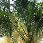 Blooms Nestle in Palm Tree by Navigator