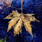 Fallen Leaf by LVanDhal