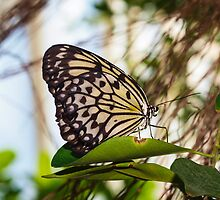 Butterfly Macro 11 by Brandon Wooters