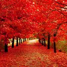Autumn Reds by Erin Guest