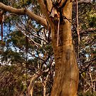 Pelican Bay Gums by Kip Nunn