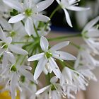 Wild Garlic&#x27;s Beauties by SmoothBreeze7