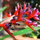 Beautiful Bromeliad # 2 by Penny Smith