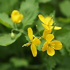 Greater Celandine by Linda Makiej