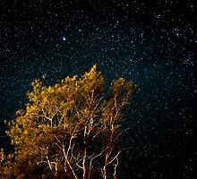 Under the stars by kutayk