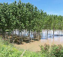 fiume Oglio - Mantova - Italia - Europa  VETRINA RB EXPLORE 20 GIUGNO 2013- by Guendalyn