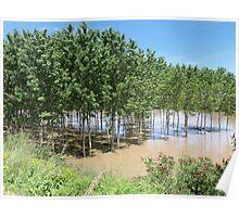 fiume Oglio - Mantova - Italia - Europa  VETRINA RB EXPLORE 20 GIUGNO 2013- Poster