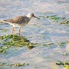 Redshank by TheWanderer27