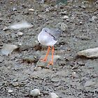 Standing redshank by TheWanderer27