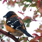 Grosbeak At Large by Arla M. Ruggles