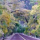 Gorgeous Fall Colors of Zion by Rachel Gagne