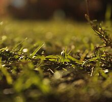 Nighttime Grass by joshuamolina