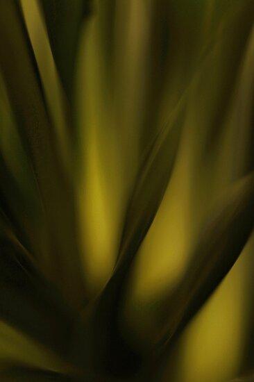 Tropical dream.. by JOSEPHMAZZUCCO